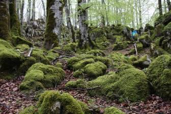 La Selva del Irati